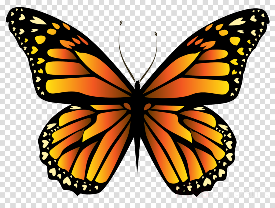 yellow butterfly png clipart Swallowtail butterfly Monarch butterfly