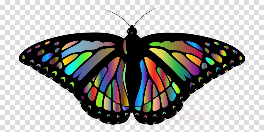 Monarch butterfly clipart Insect Monarch butterfly Brush-footed butterflies