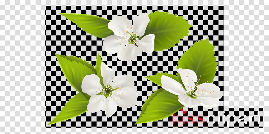 Flower Illustration Green Transparent Png Image Clipart Free