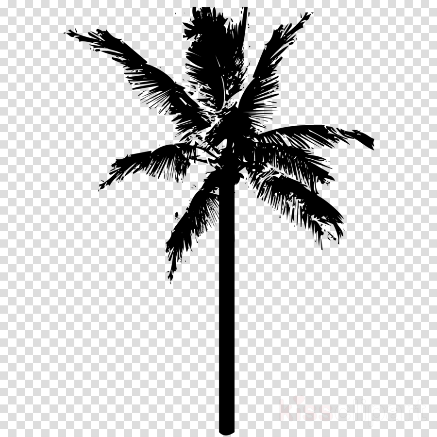 Coconut Plant Tree Transparent Png Image Clipart Free Download