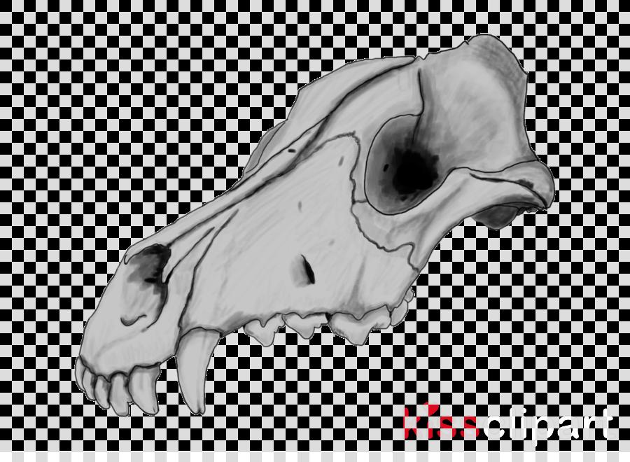 Skull Sketch Clipart Dog Skull Drawing Transparent Clip Art