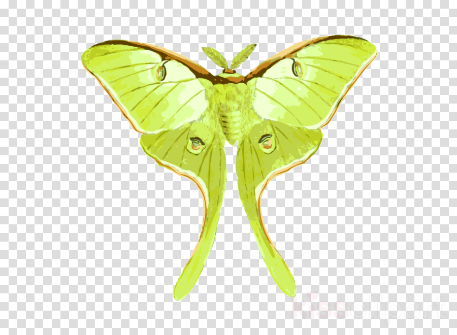 Monarch Butterfly Drawing Clipart Illustration Drawing Butterfly Transparent Clip Art