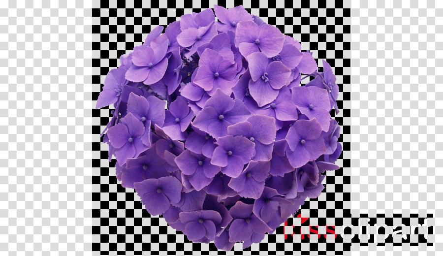 transparent hydrangea clipart French hydrangea Oakleaf hydrangea Flower bouquet