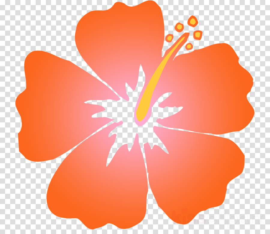 Flower Orange Plant Transparent Png Image Clipart Free Download