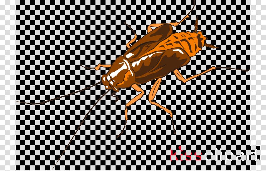Cockroach clipart German cockroach American cockroach