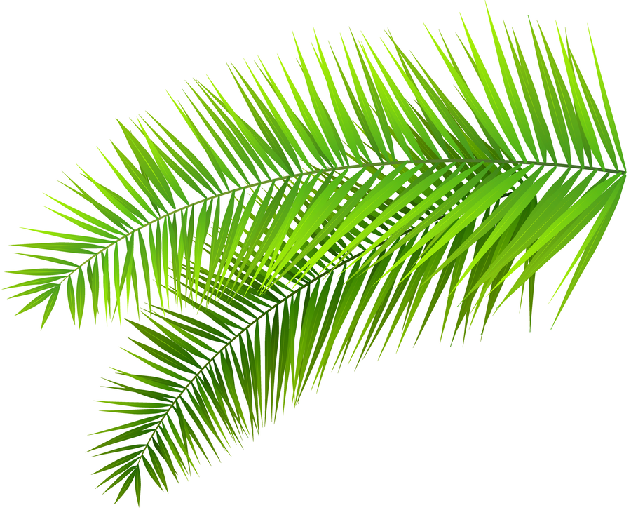 palm tree leaves clipart Palm trees Palm branch Clip art