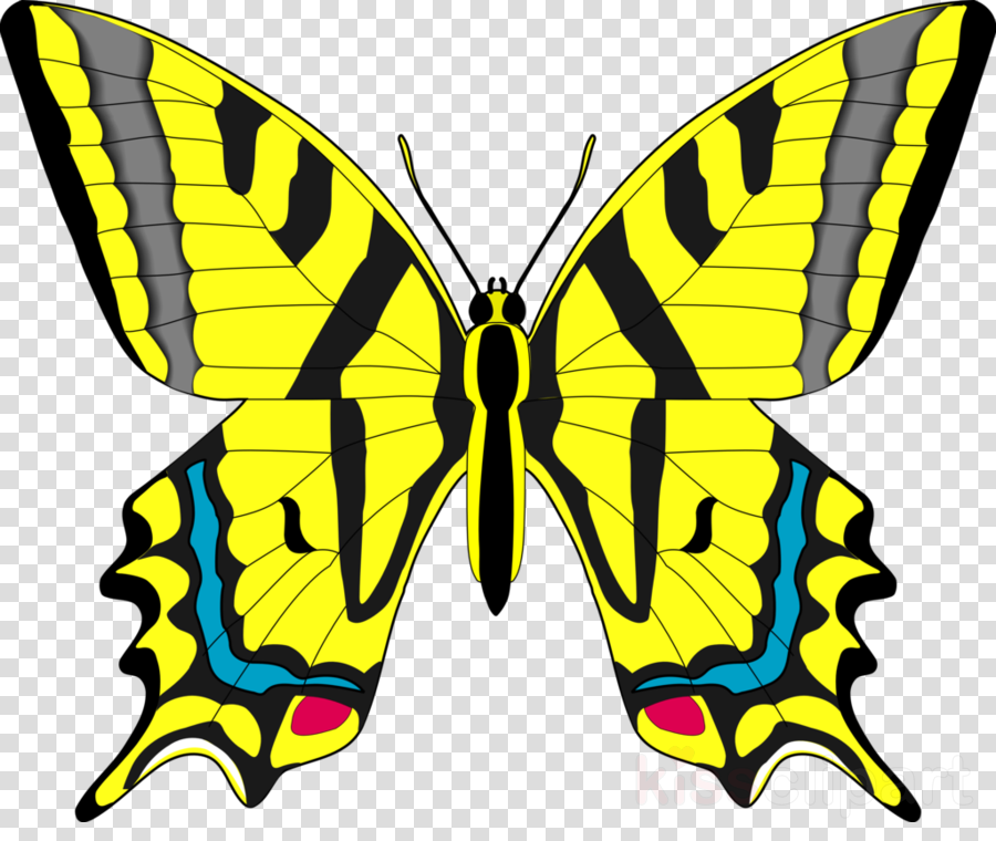 Butterfly yellow. World cartoon clipart wing