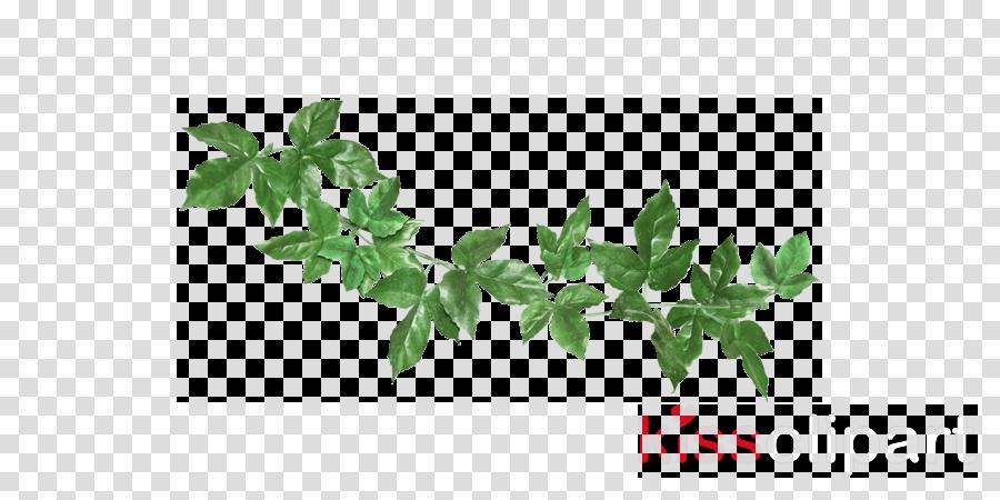 Basil Leaf Clipart Leaf Plant Tree Transparent Clip Art