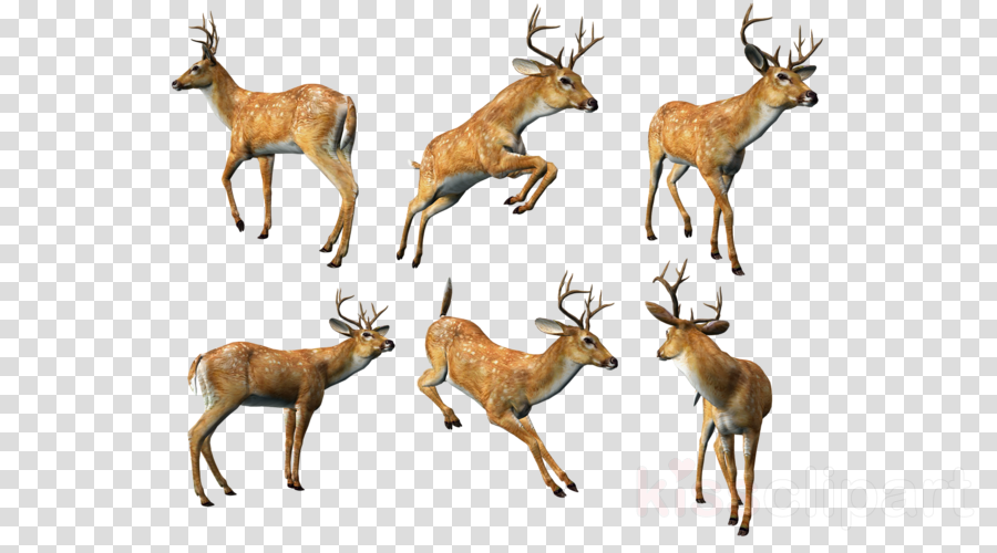 3d deer png clipart White-tailed deer Clip art
