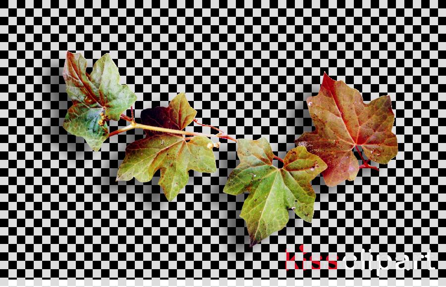 Autumn clipart Autumn Leaves Leaf