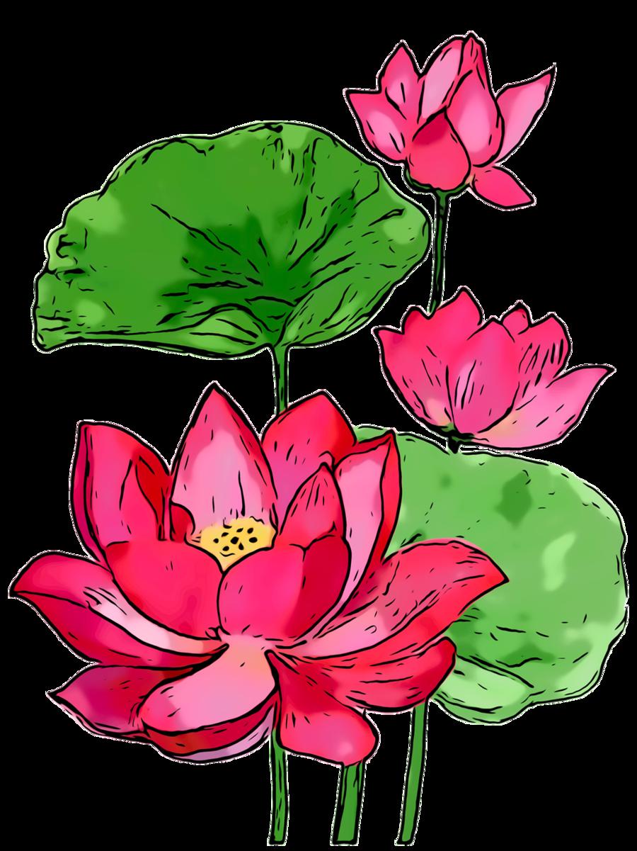 Lotus Flower Floral Transparent Png Image Clipart Free Download