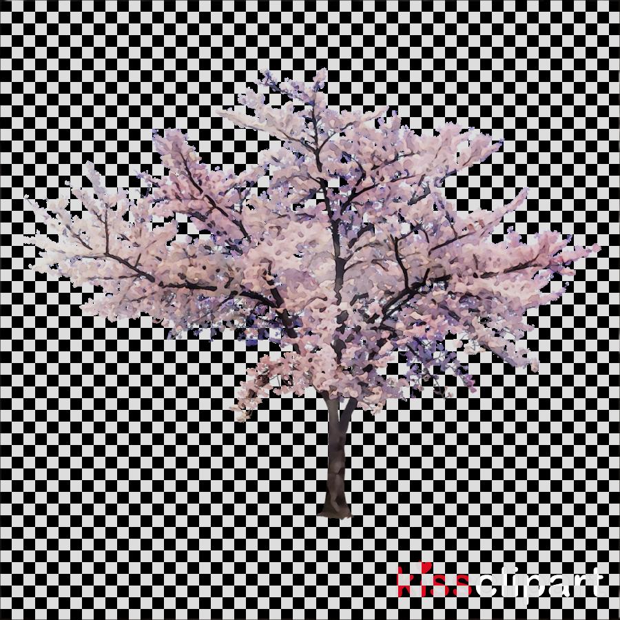 cherry blossom png clipart Cherry blossom