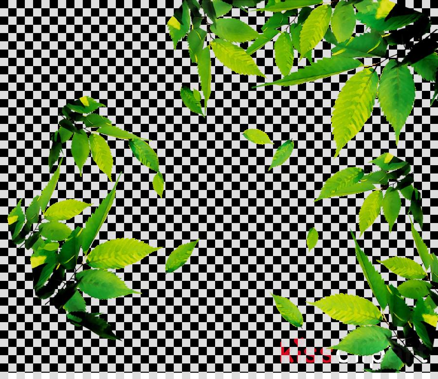 Leaf Green Tea clipart - Tea, Drink, Leaf, transparent clip art