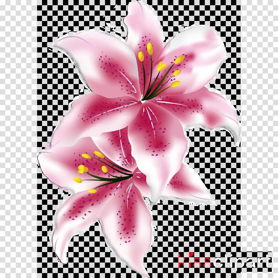 Clip Art Lillies Clip Art - Lily Clipart, HD Png Download , Transparent Png  Image - PNGitem