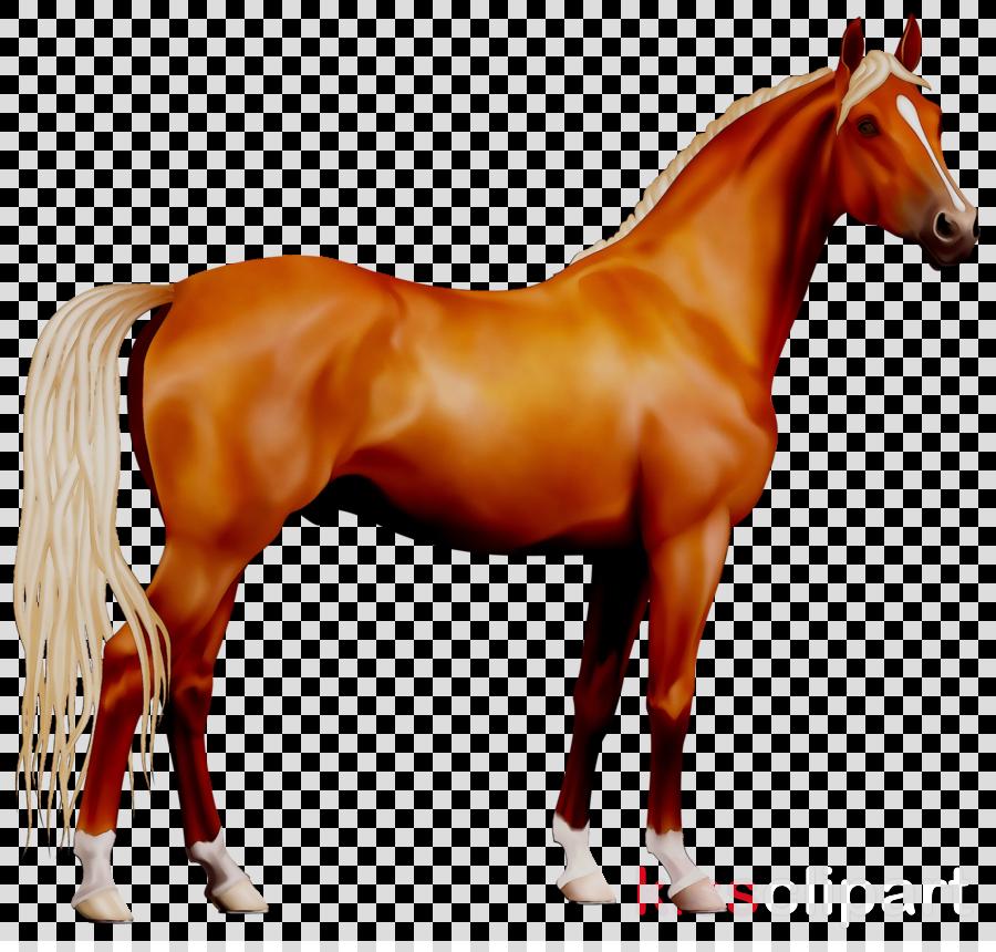 horse png clipart Morgan horse Pony
