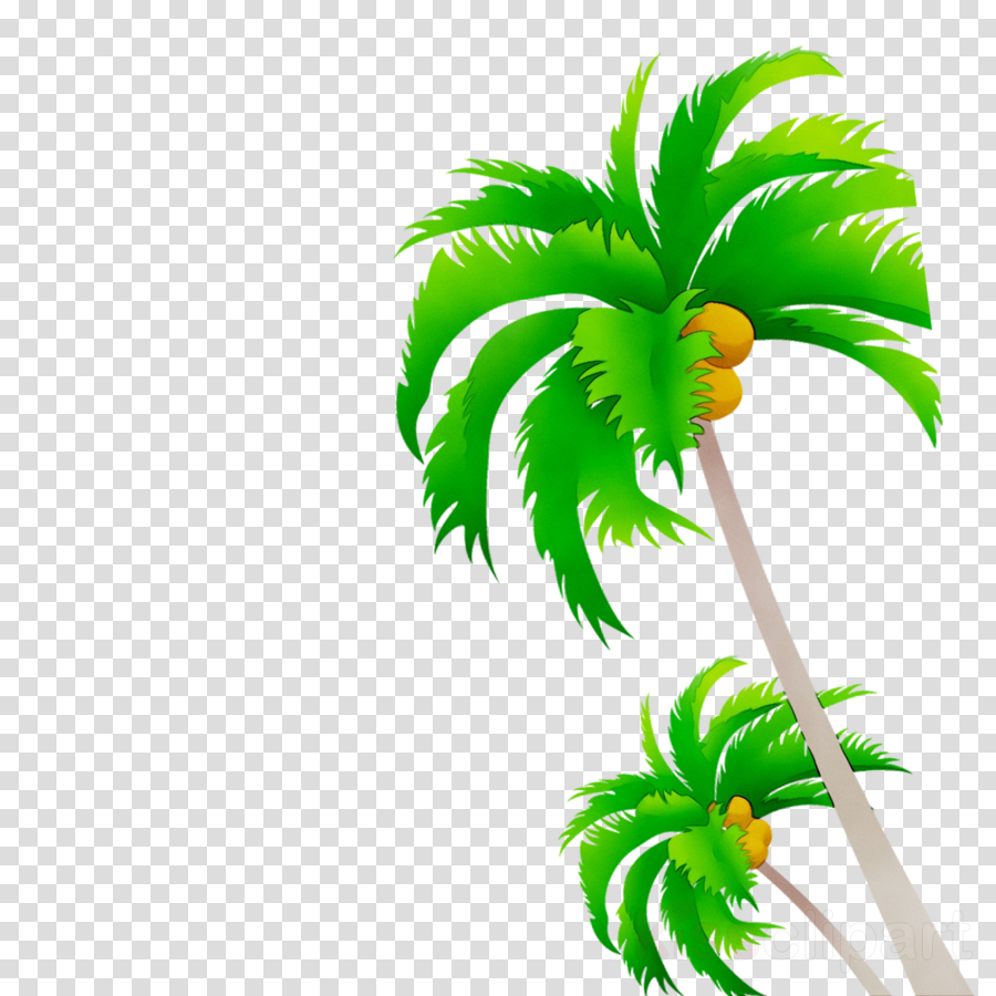 Coconut Tree Plant Transparent Png Image Clipart Free Download