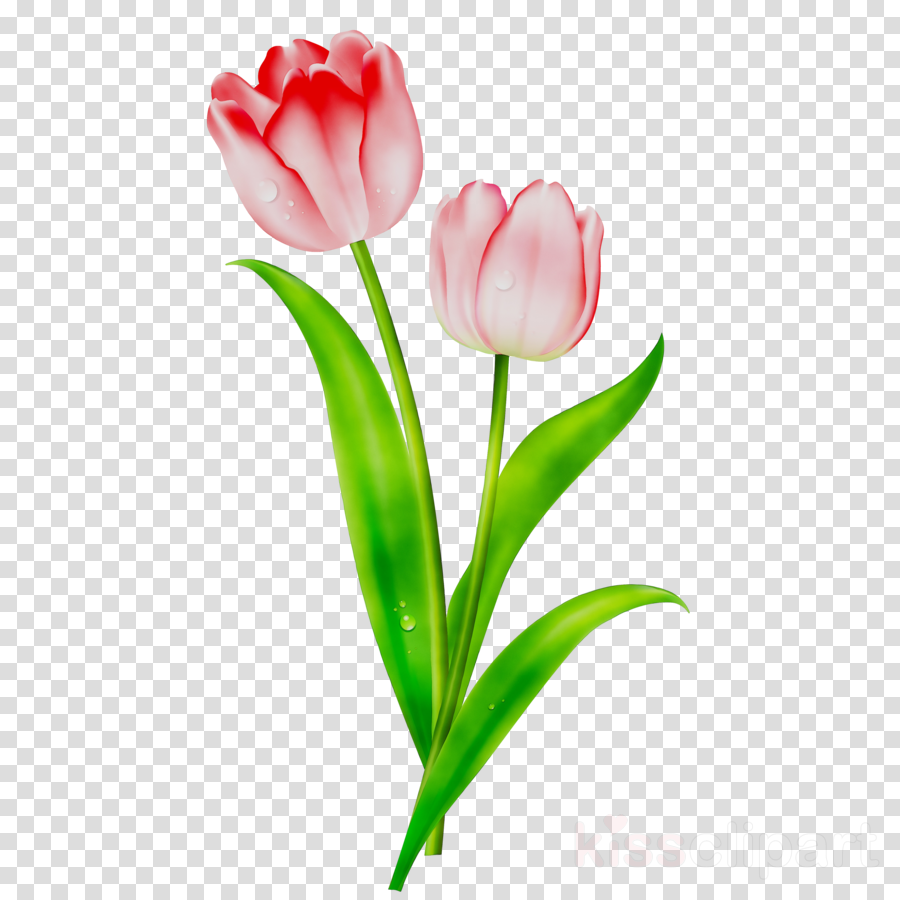 Lily Flower Cartoon Clipart Cartoon Flower Tulip Transparent