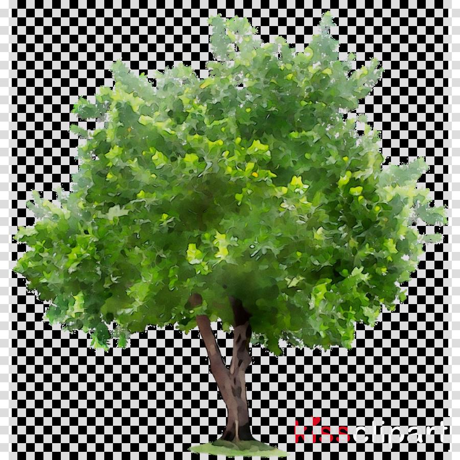 environmental tree clipart Plane trees Environmental protection