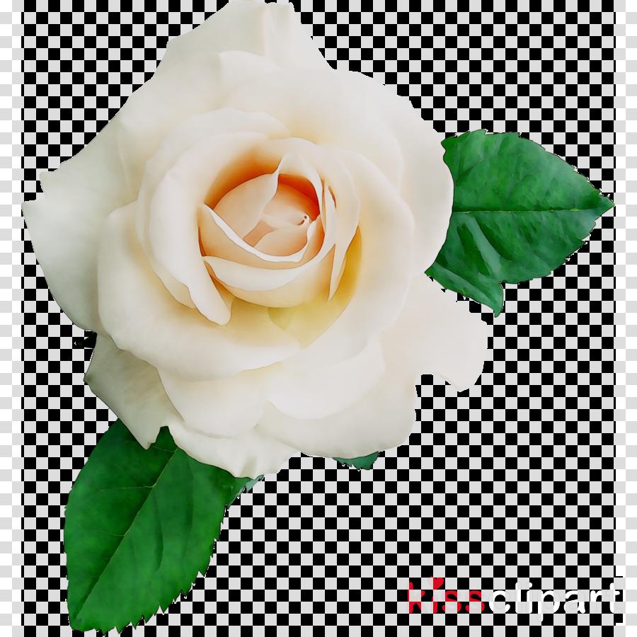 garden roses clipart Garden roses Cabbage rose Floribunda