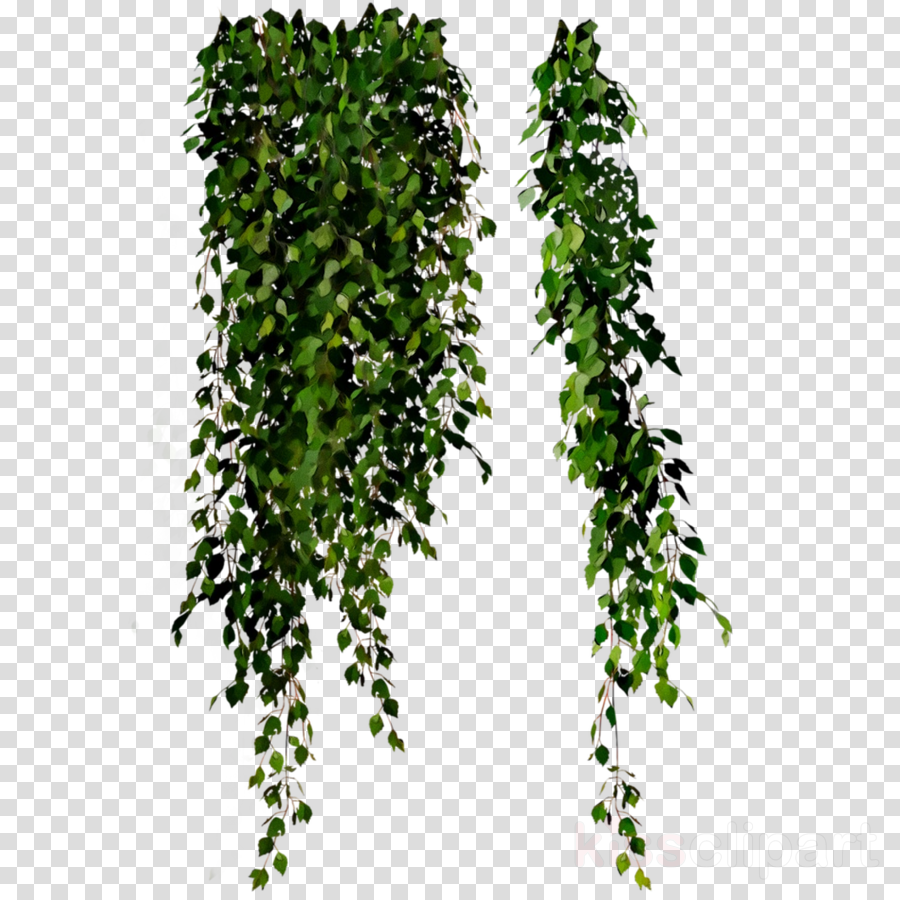 Leaf Tree Shrub Clip art
