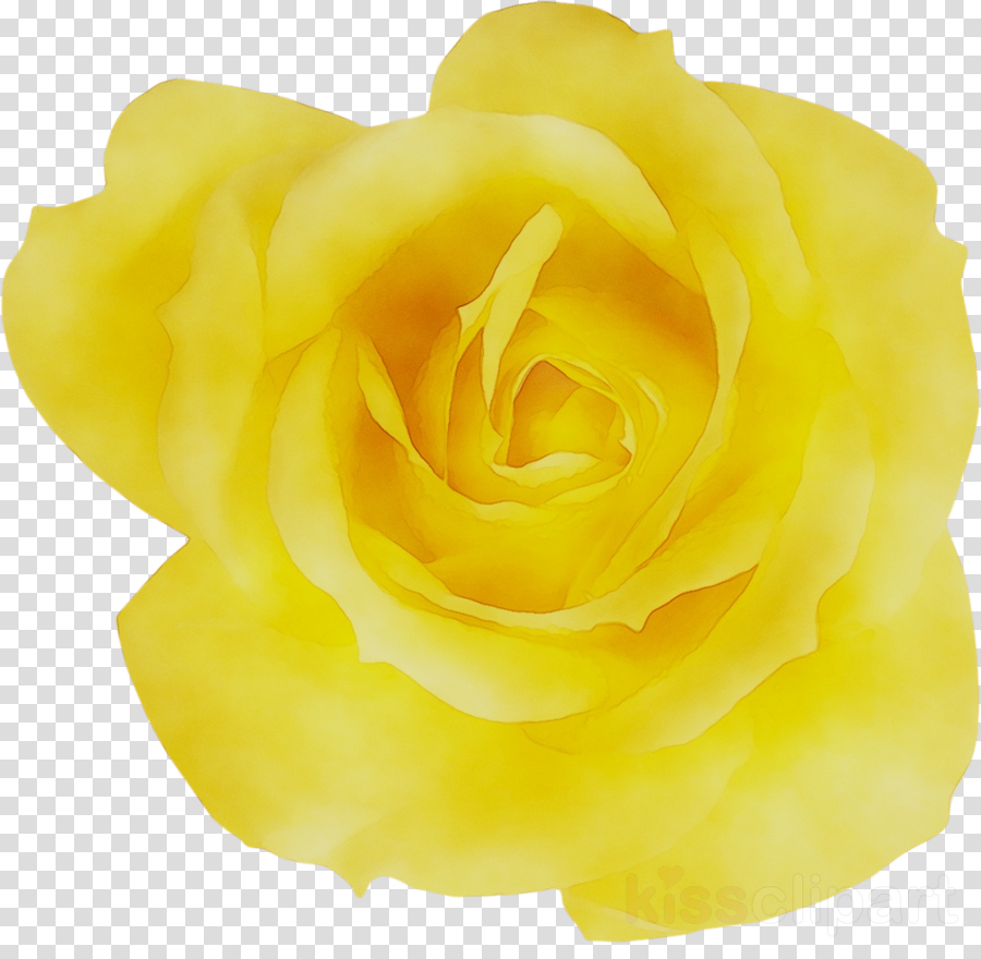 Yellow Rose Flower Transparent Png Image Clipart Free Download