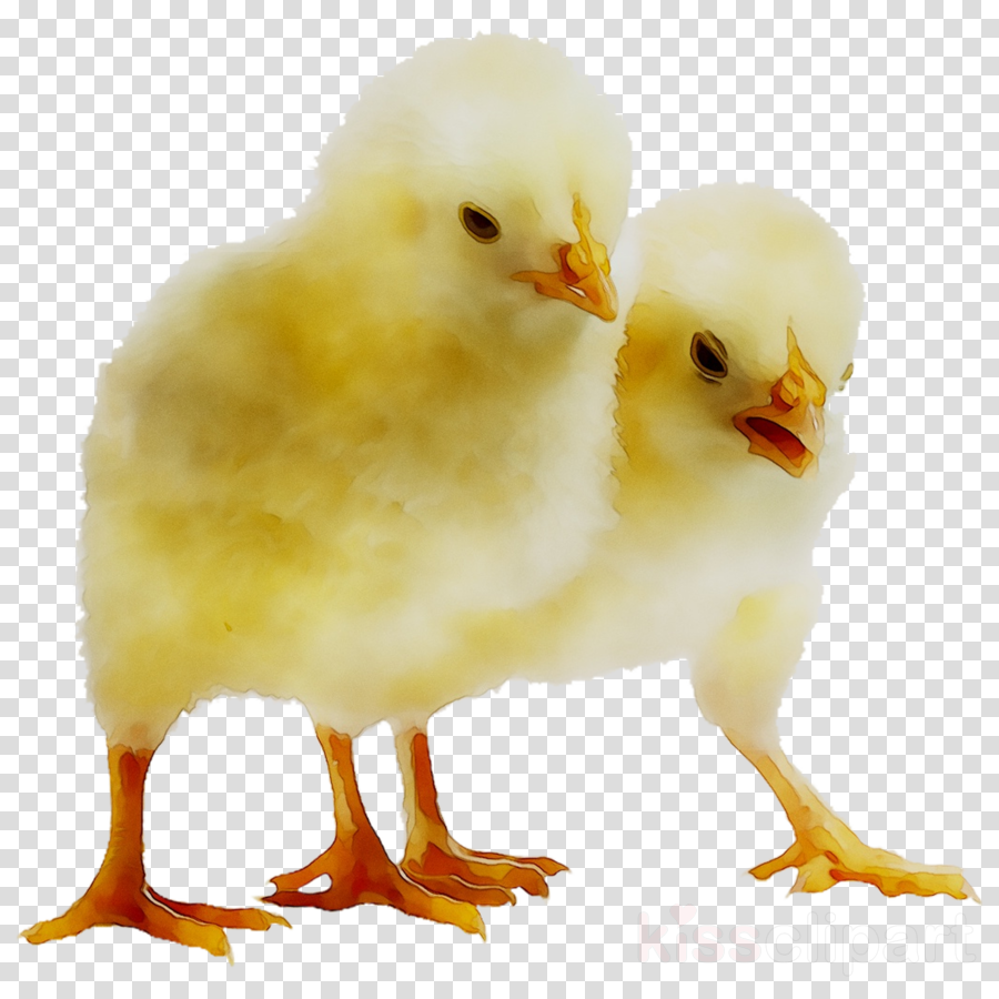 Chicken Nugget Background