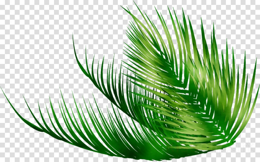 Family Tree Background Clipart Green Leaf Plant Transparent Clip Art Download the perfect tropical leaves pictures. family tree background clipart green