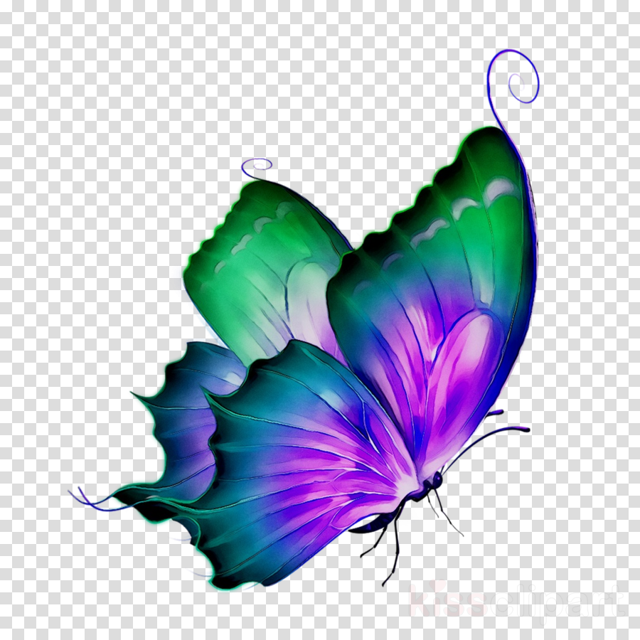 butterfly purple png clipart Butterfly Clip art