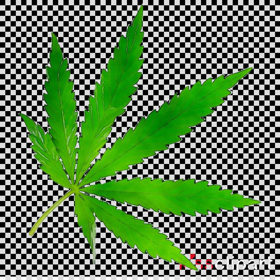 Cannabis Leaf Background clipart - Tshirt, Car, Leaf ...