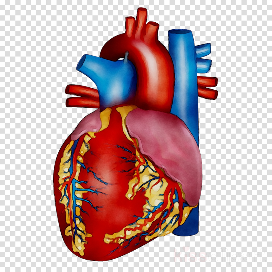 Human Heart Background