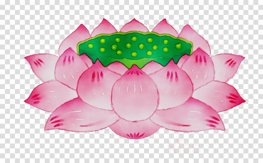 Pink Lotus Flower Transparent Png Image Clipart Free Download