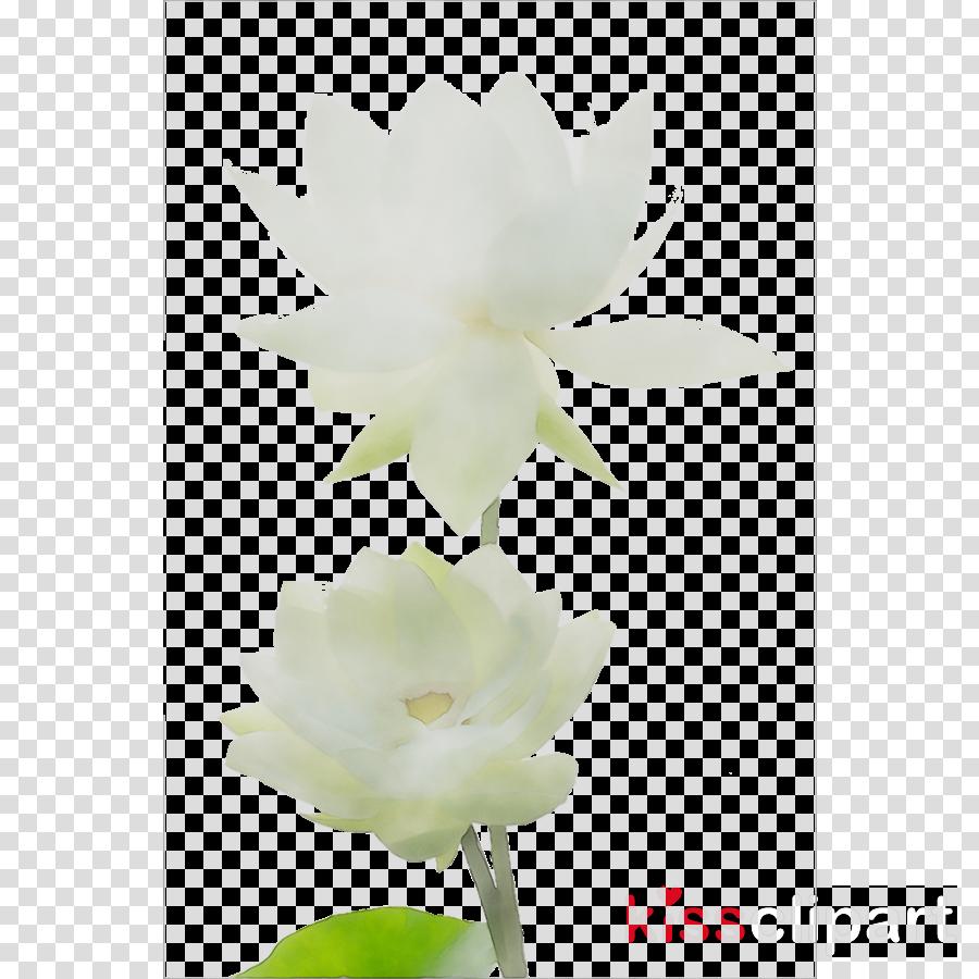 petal clipart Moth orchids Still life photography Herbaceous plant