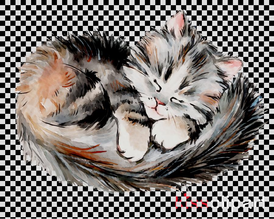 Кошки спят картинки для детей