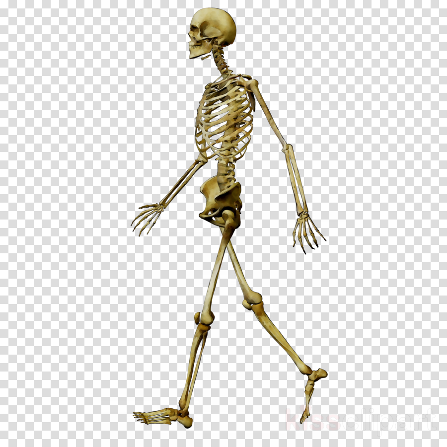 skeleton clipart Human Skeleton Metal