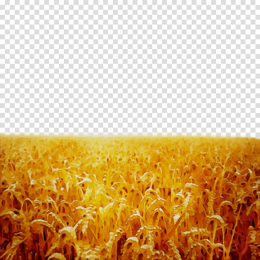 Autumn Rice Fields Of Wheat, Rice Clipart, Wheat Clipart, Fall PNG  Transparent Clipart Image and PSD File for Free Download