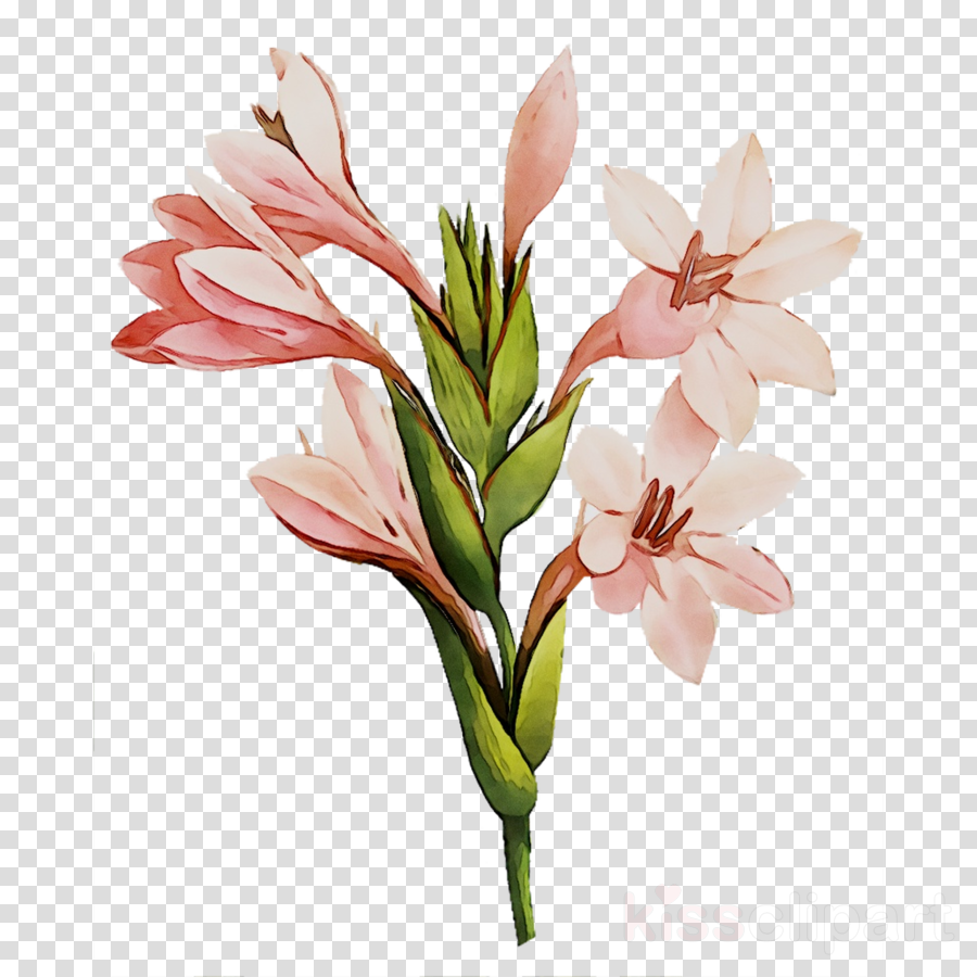 cut flowers clipart Alstroemeriaceae Cut flowers