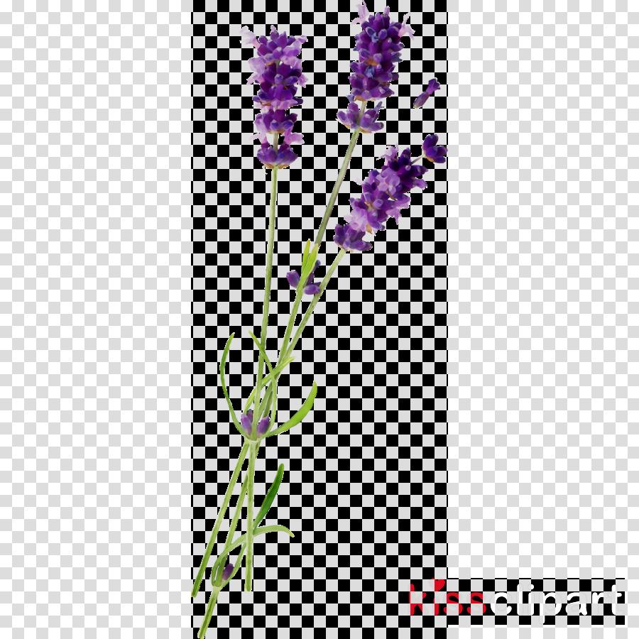 Lavender Background