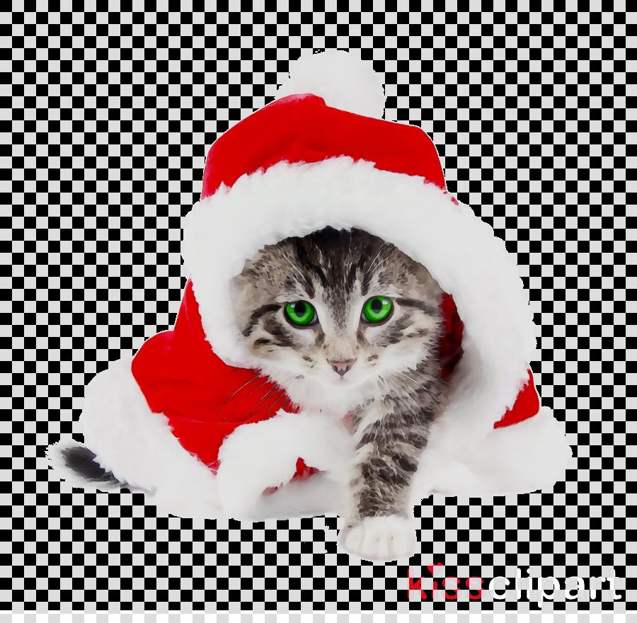 Christmas Hat Cartoon clipart , Cat, Kitten, Christmas