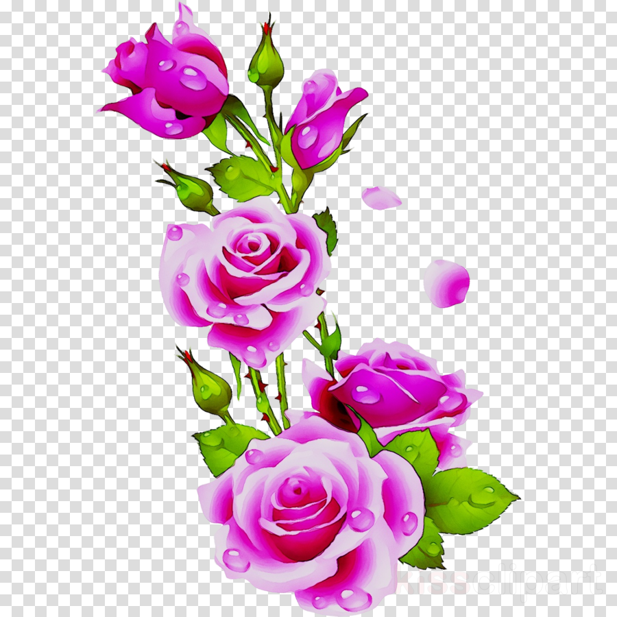 Pink Flowers Background Clipart Rose Flower Pink Transparent