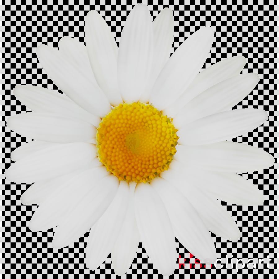 Cartoon Daisy Flower Background Daisy Flower Wallpaper Cartoon