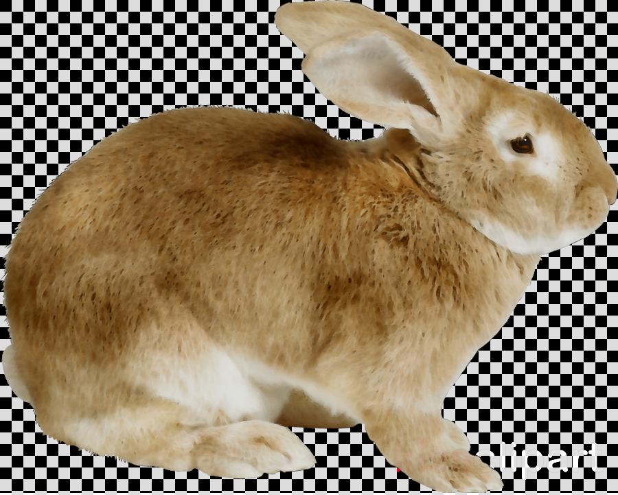 domestic rabbit clipart Domestic rabbit European rabbit