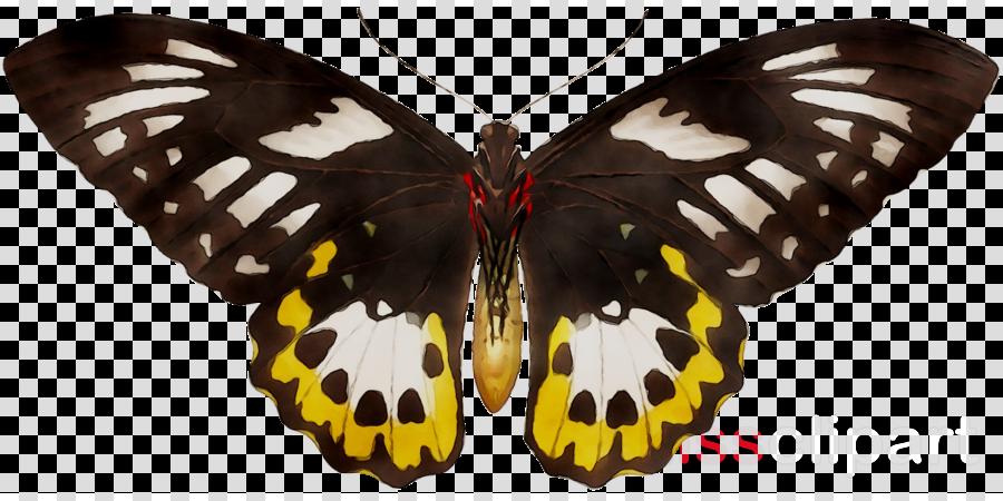 Caterpillar Cartoon
