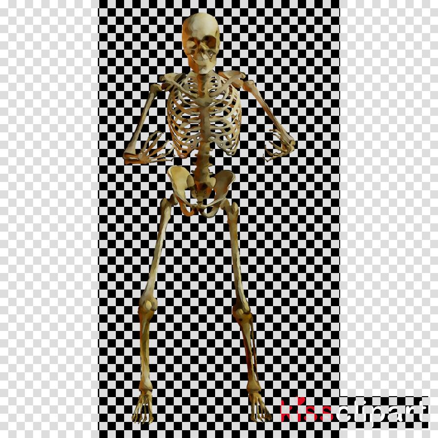 skeleton clipart Human Skeleton