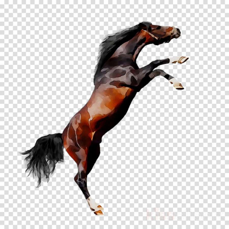 arabian horse on white background clipart Arabian horse Thoroughbred Appaloosa