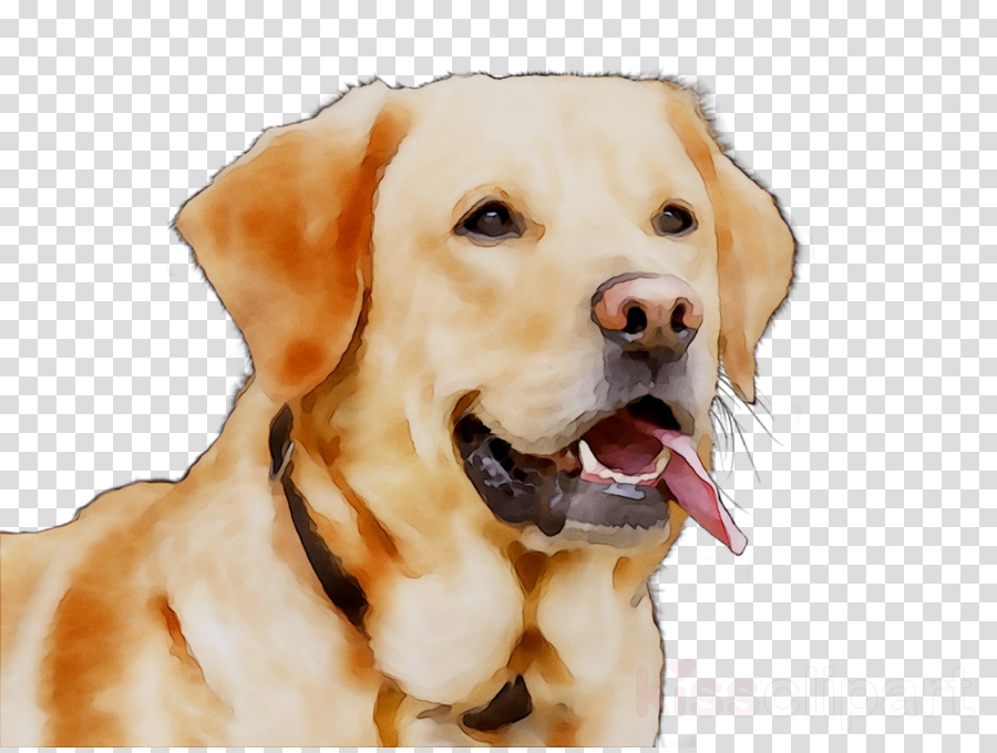 Golden Retriever Background
