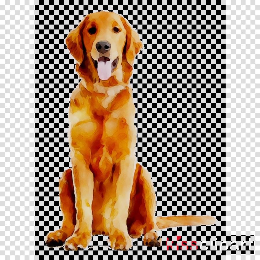 Dog clipart Golden Retriever Labrador Retriever Puppy