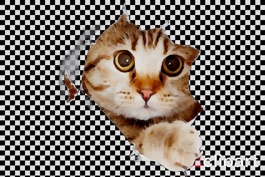 Cats Cartoon