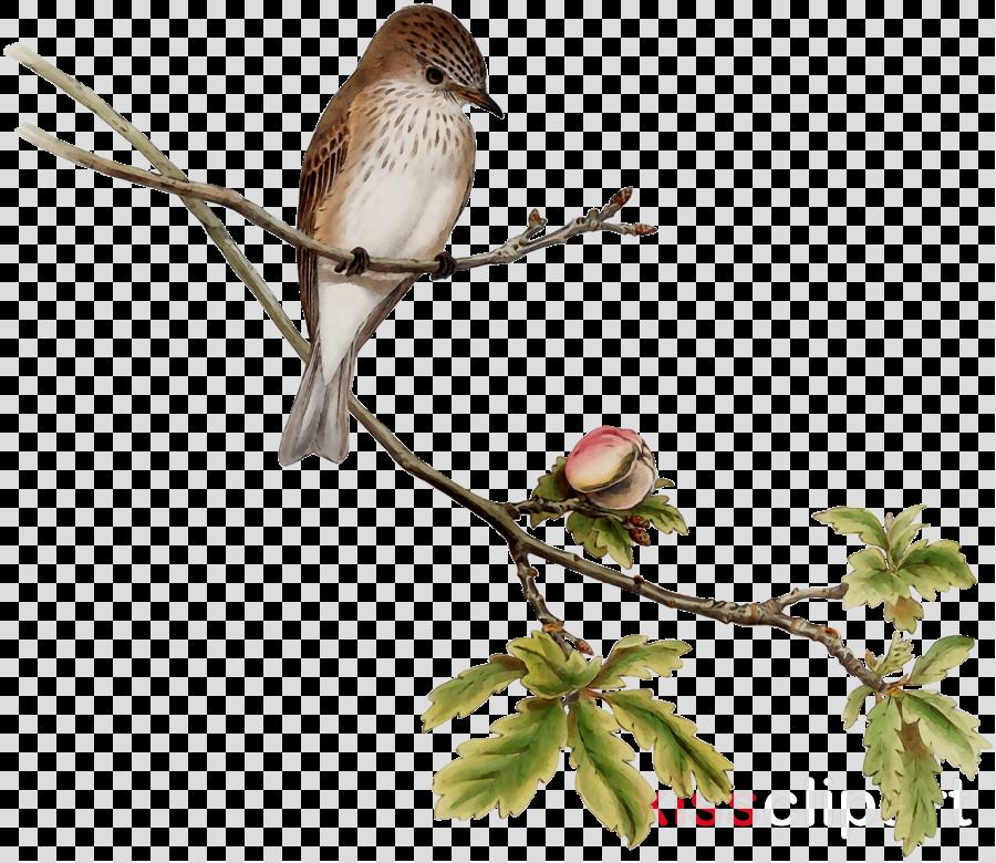 Twig Background