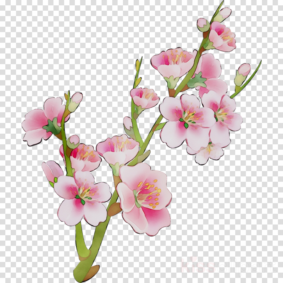 Flowers Blossom Clips Art
