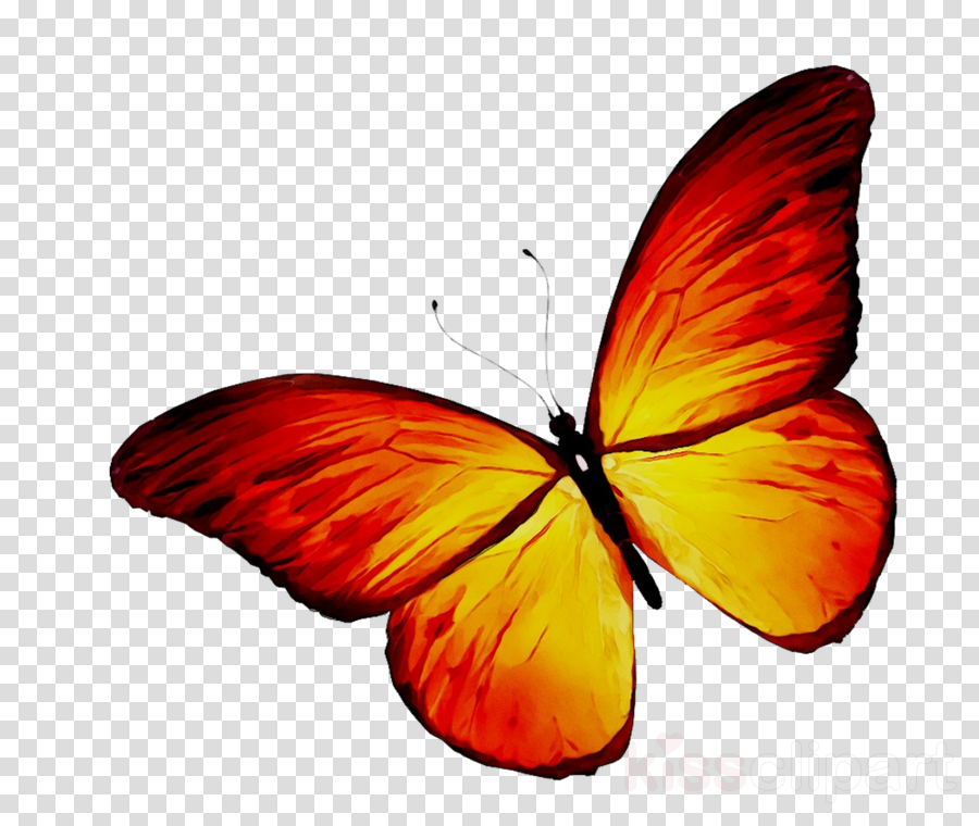 Butterfly Tattoo In Color Best Tattoo Ideas